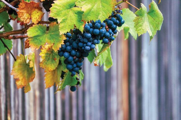 Vídex, un 'salón vitivinícola' estable ante la amenaza del Covid-19